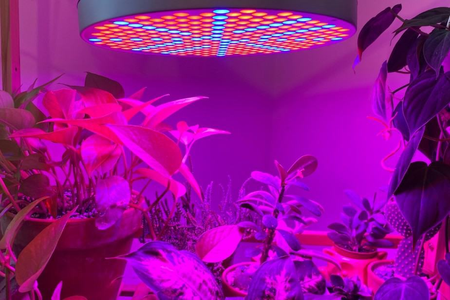 Grow Lights over indoor plants during the winter months can really help make up for the lack of natural light your houseplants need