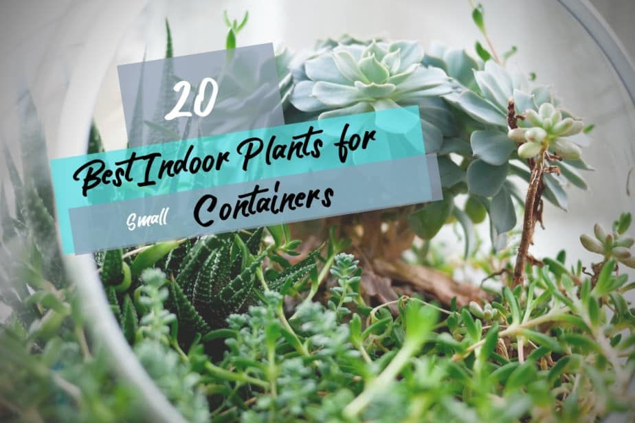 The Best Indoor Plants To Grow In Small