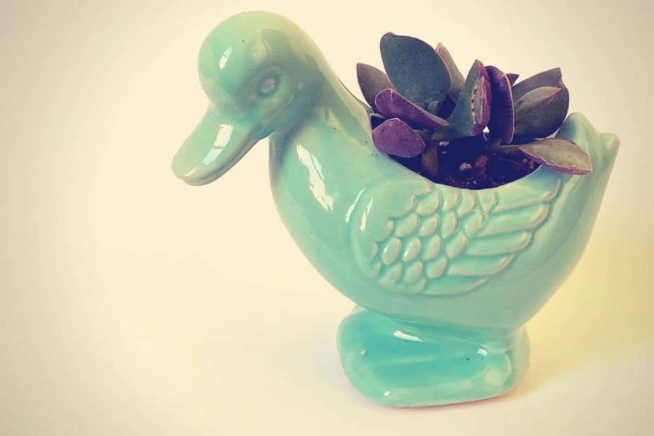 small cactus in a small ceramic planter that looks like a duck