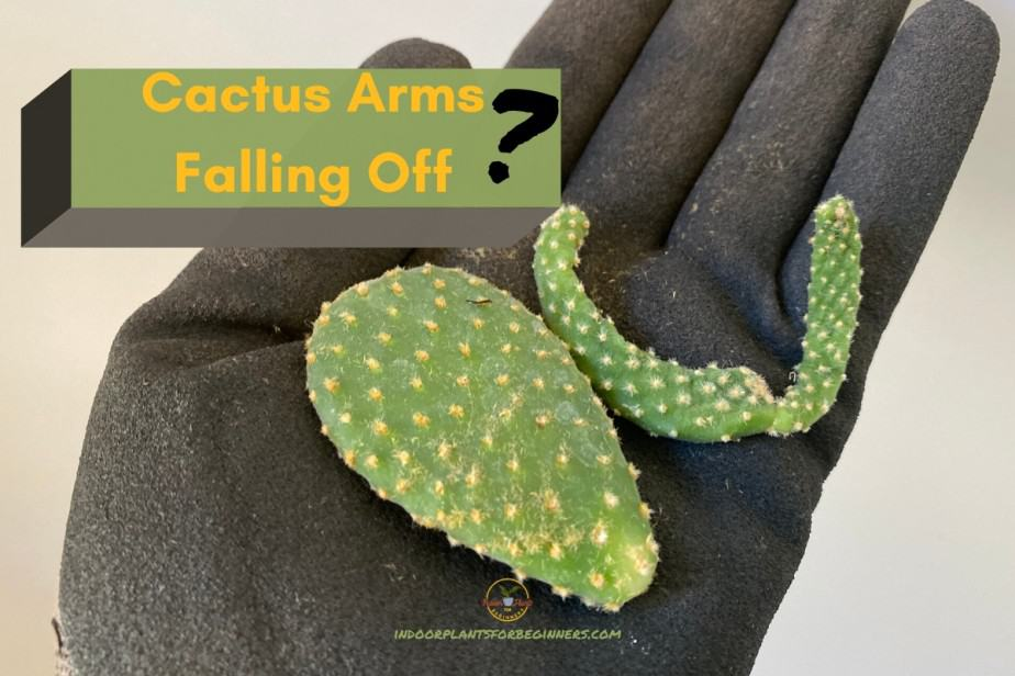 Fred Zimmer from indoorplantsforbeginners.com Holding broken off cactus arms in hand