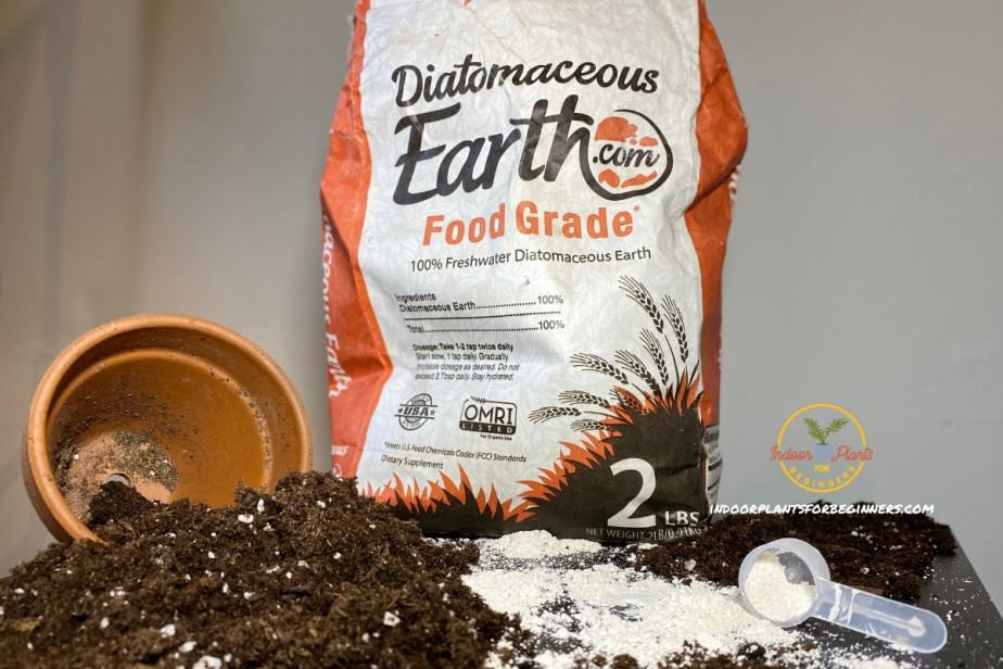 Diatomaceous Earth poured on table with spilled houseplant pot of soil
