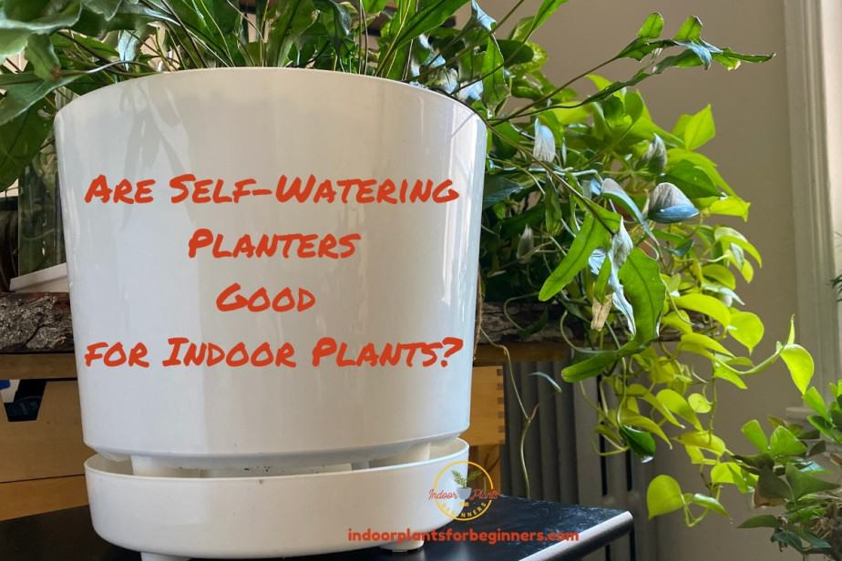 Self-Watering Planter for Indoor Plants