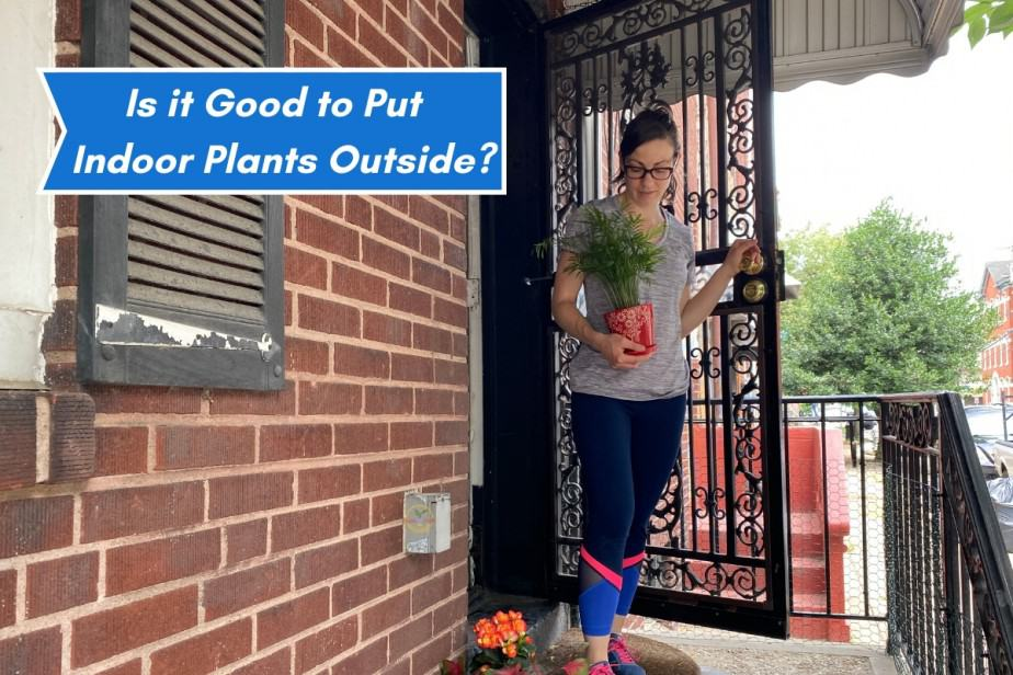 Anya from IndoorplantsforBeginners.com putting a few houseplants outside for some fresh air and sunshine