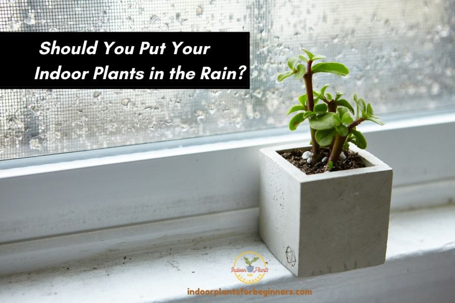 Indoor Plant in window sill while it's raining outside
