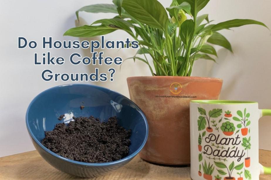 Do Houseplants REALLY Like Coffee Grounds?