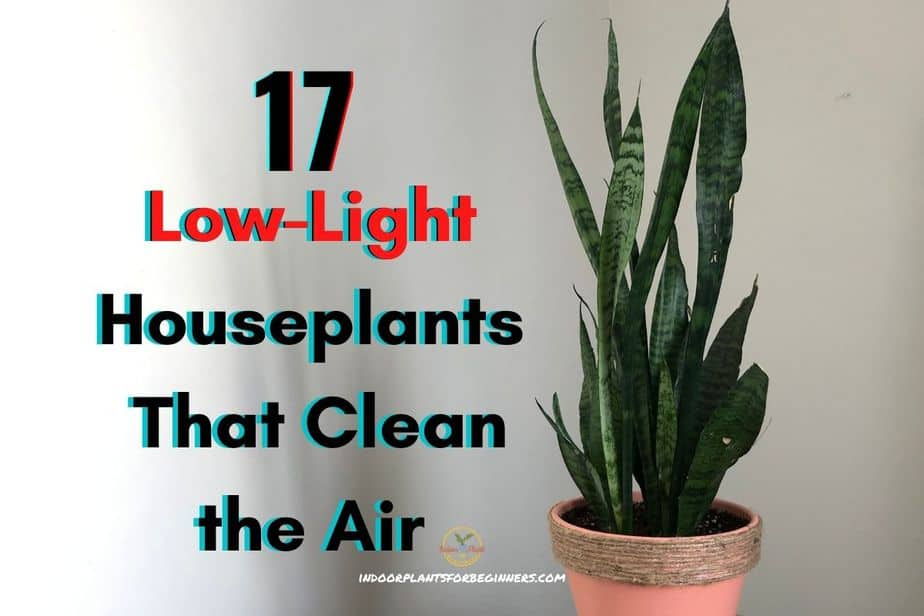 17 Low-Light Houseplants That Clean the Air Brought to you by: indoorplantsforbeginners.com