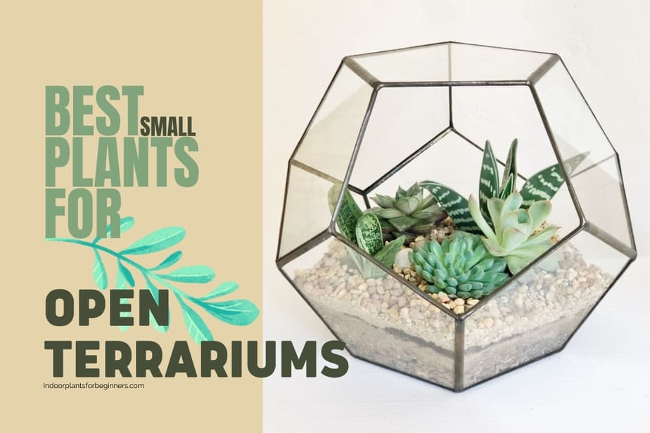 The Best Small Plants for Open Terrariums image of small mixture of succulents & other houseplants that are excellent choices for small terrariums