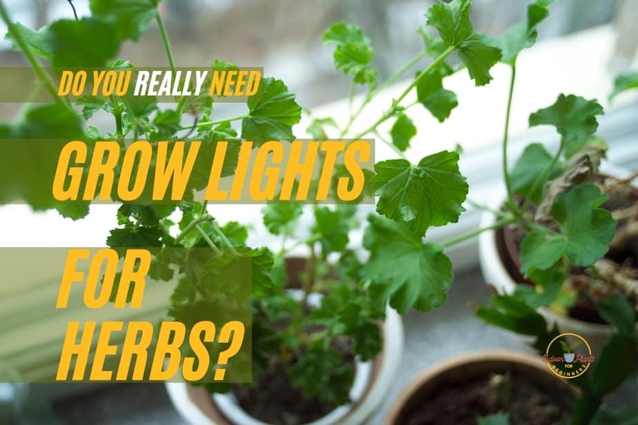 do you need a grow light to grow herbs indoors