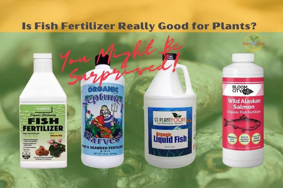 Are Fish Fertilizers really good for Plants?
