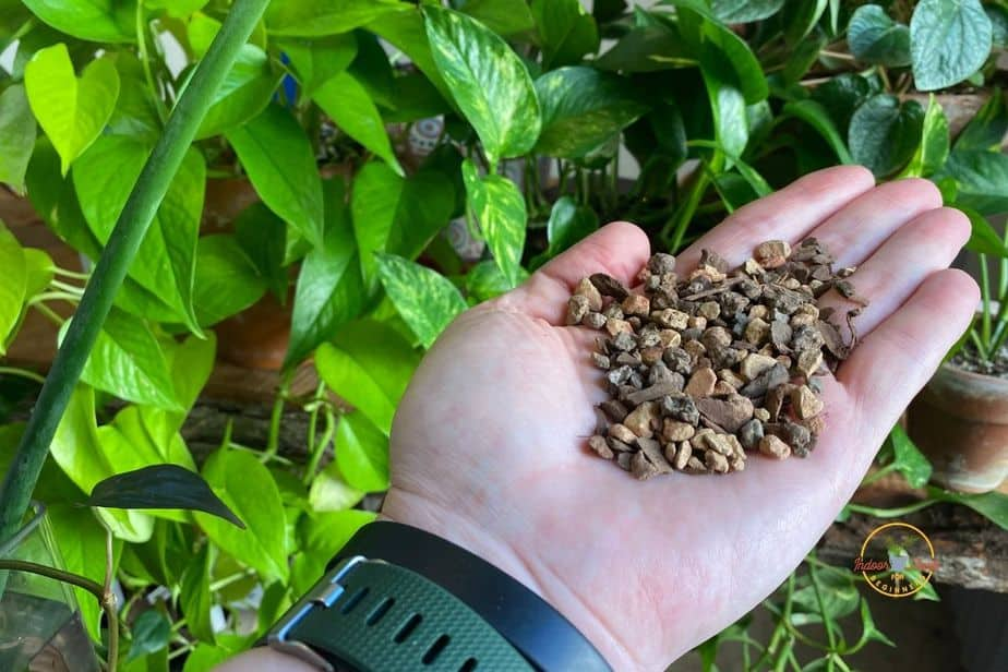 Showing aerated potting mix that helps to Prevent Root Rot in Potted Plants