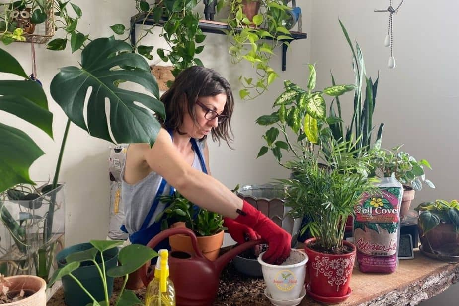 Anya from indoor plants for beginners repotting a few indoor plants in plant room