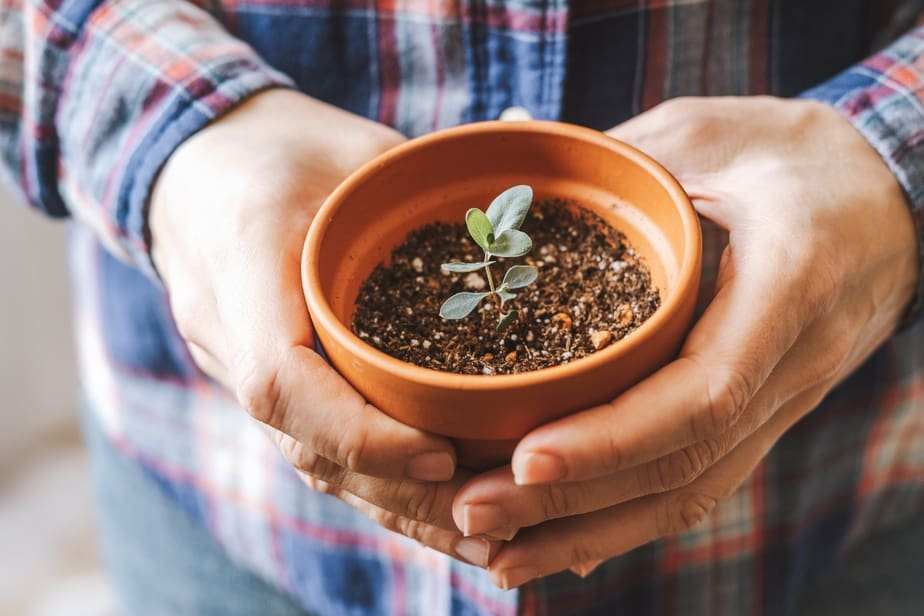 Holding a small terracotta pot with a Eucalyptus plant sprouting up