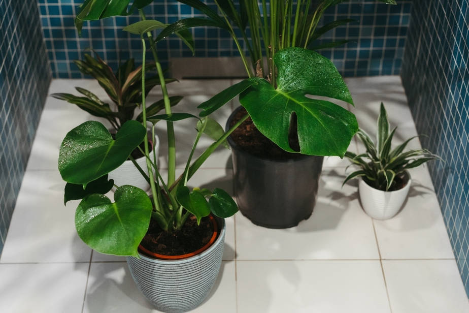 Plants That Thrive in a Windowless Bathroom philodendron and more getting watered in shower