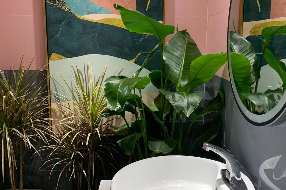 Plants That Thrive in a Windowless Bathroom spider plant, rubber tree, alocasia