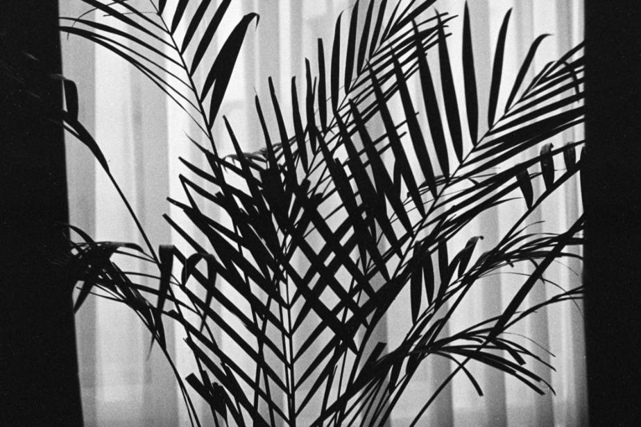 low light indoor palms and trees in front of window with sheer curtains